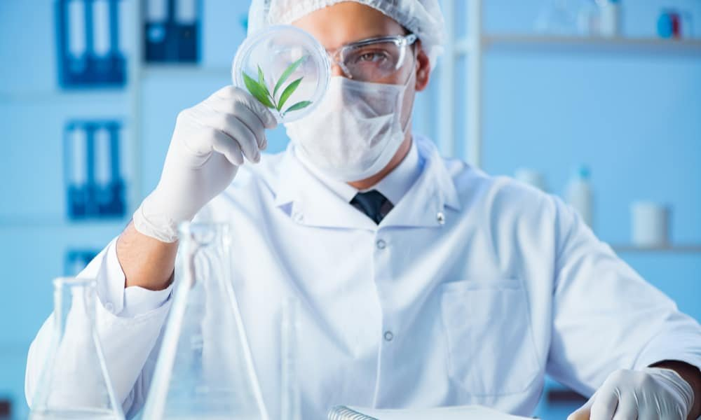 World's First Trial to Treat Brain Cancer with Medical Cannabis is About to Start